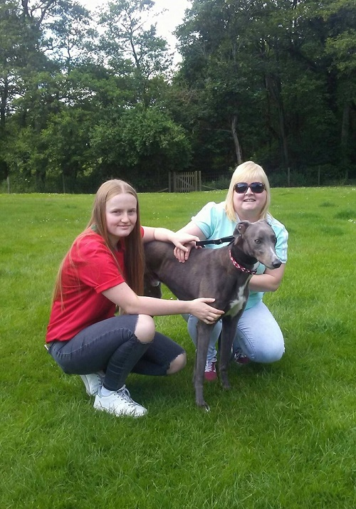 Lovely blue boy Alan changed his name to Leo as he left our kennels with the Loftus family
