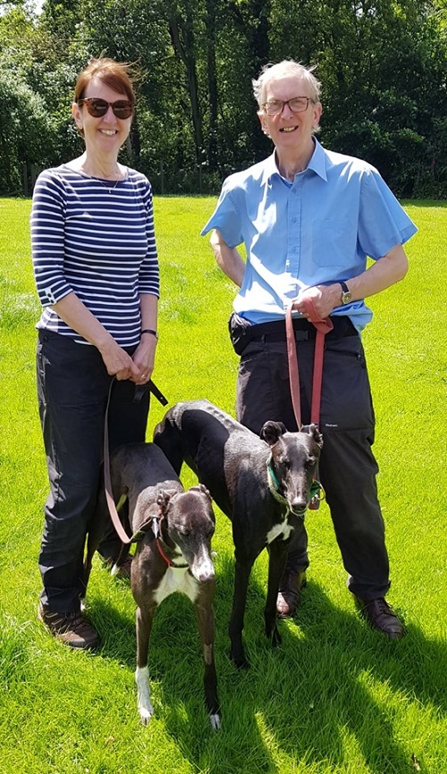 Volunteers Philip and Janet brought Ollie to the Kennels to find a new companion. Sweet girl Sox was the lucky one he chose and they were soon together in the back of the car. Sox will be much loved by the King family