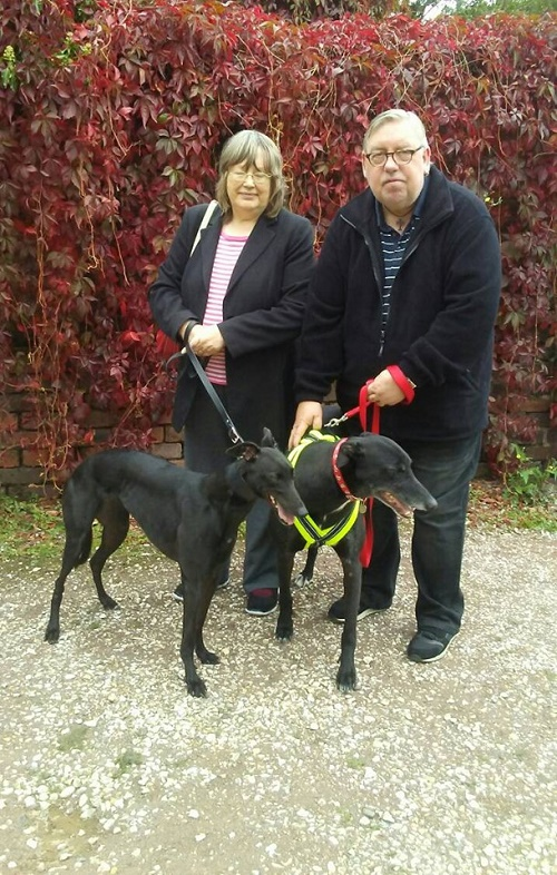 Gentle girl Lolly changed her name to Alys as she left us to become a new companion for Alfy and the Laverick family