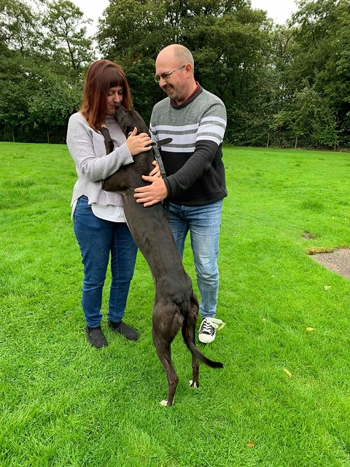 It didn't take long for Muffin to fall in love with her new owners! She changed her name to Leaf as she left for her new life with the Loftus family and their existing hound Kat