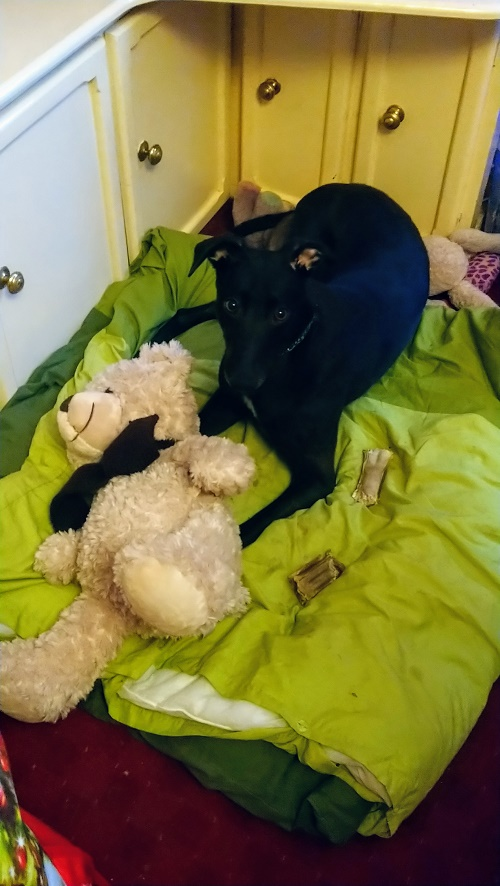 Freddie (Fozzieflintstone) loves his Teddy bear!