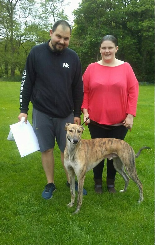 Gorgeous brindle hound Figgy kept his name as he left us for his new life with the Crompton family