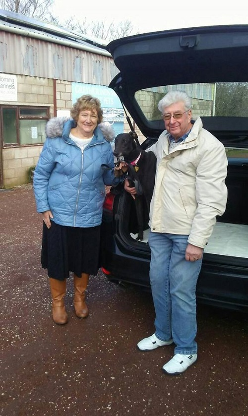 Lovely hound Flossie kept her name as she left us to join the Dowell family. She couldn't wait to be on her way and soon jumped in the car!