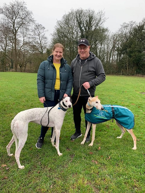 And the last hound to leave us in 2019 is handsome chap Frosty, who changed his name to Danny as he left for his forever home with the Evans family and his new hound brother Monty