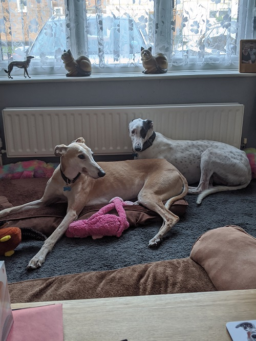 Happy Hounds in Homes December 2019