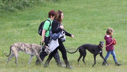 Great Global Greyhound Walk - 9th June 2019