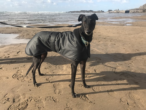 Jet enjoying a day at the beach