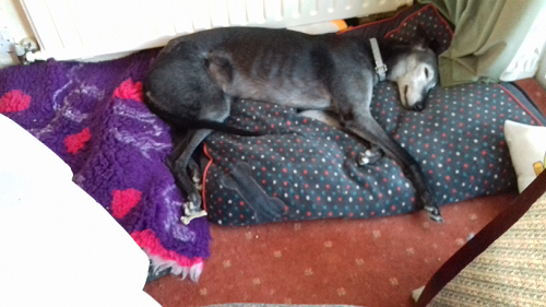 Murphy snoozing